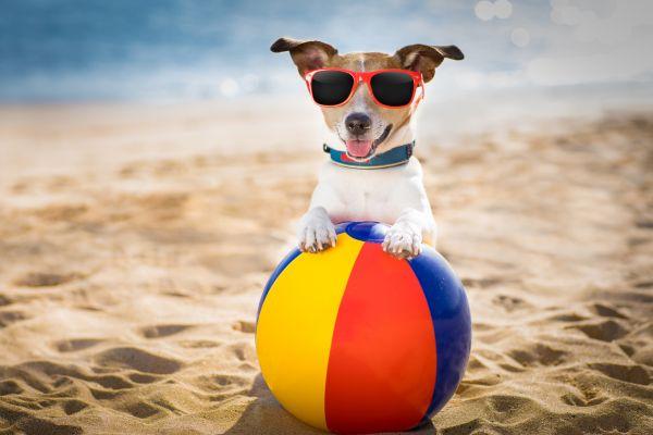 Pies na plaży - o czym trzeba pamiętać?