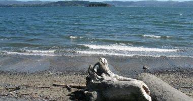 Eastbourne Beach, Wellington, Nowa Zelandia