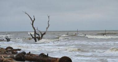 Boneyard Beach, Charleston, Stany Zjednoczone