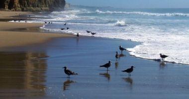 Pomponio State Beach, Half Moon Bay, Stany Zjednoczone