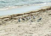 Dania Beach (FL), Stany Zjednoczone