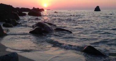 Michelino Beach, Parghelia, Włochy