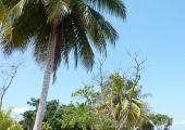 Livingston, Rio Dulce (Izabal Department),