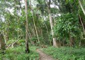 Cocles, Puerto Viejo, Kostaryka