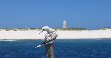Plaża na Wyspie Baker nad Oceanem Spokojnym