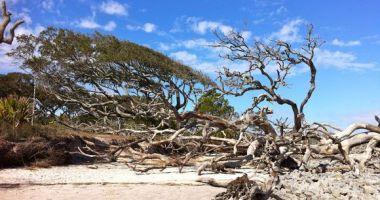 Plaża Driftwood Beach, Stany Zjednoczone