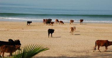 Agonda Beach, Agonda, Indie