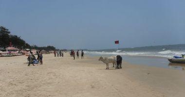 Baga Beach, Baga, Indie