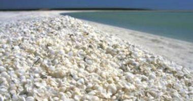 Plaża Shell Beach, Denham, Australia